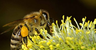 World Bee Day - May 20 - A Day as Today - Events and Curiosities - Dorian's Secrets: The Eternal Youth Magazine