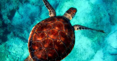World Turtle Day - May 23 - A Day as Today - Events and Curiosities - Dorian's Secrets: The Eternal Youth Magazine
