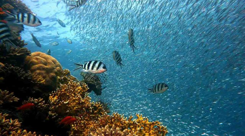 World Oceans Day - June 8 - A Day as Today - Events and Curiosities - Dorian's Secrets: The Eternal Youth Magazine