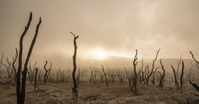 World Day to Combat Desertification and Drought - June 17 - A Day as Today - Events and Curiosities - Dorian's Secrets: The Eternal Youth Magazine