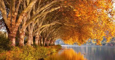 Events and Curiosities - tree, nature, autumn - July 3 - A Day as Today - Events and Curiosities - Dorian's Secrets: The Eternal Youth Magazine