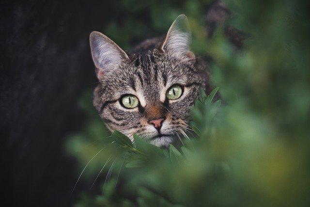 Cats Universe Dorian's Secrets The Eternal Youth Magazine