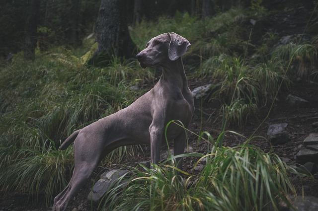 Dogs Universe Dorian's Secrets The Eternal Youth Magazine