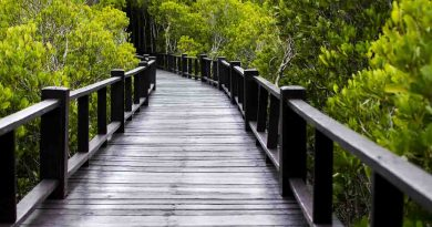 July 26 A Day as Today Mangrove Ecosystem Dorian's Secrets: The Eternal Youth Magazine