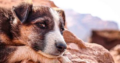 July 27 A Day as Today Street Dog Dorian's Secrets: The Eternal Youth Magazine